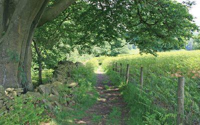 Walk 18: Fernilee west bank
