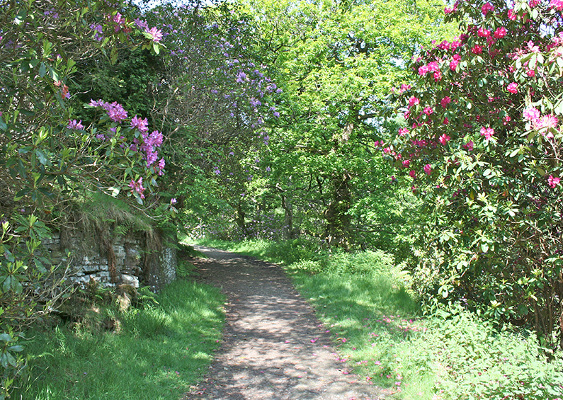 7: The rhododendrons
